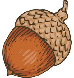 Ripe acorn vector