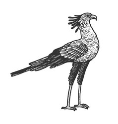 Secretary bird animal sketch vector