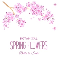 Card of cherry blossom flowers vector image vector image