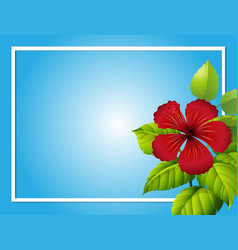 Blue background template with hibiscus flower vector