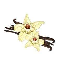 Vanilla sticks with a flower on white background vector image