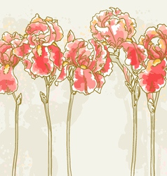 background with red iris flowers vector image
