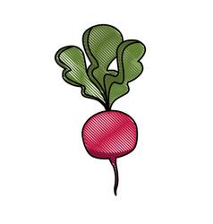 draw beet vegetable nutrition vitamin food health vector image