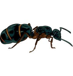 Cartoon queen of ants vector