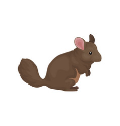 Chinchilla cute small rodent animal vector