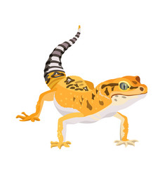 gecko lizard animal reptile in natural wildlife vector image