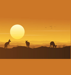 kangaroo on the hill beauty scenery silhouette vector image