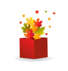Multicolored maple leaves in opened red box vector
