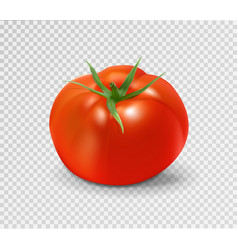 red tomato realistic vector image