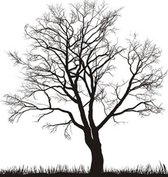walnut tree in winter vector image vector image