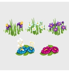Five flowerbeds with different flowers vector image