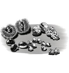 Walnuts chestnuts hazelnuts vector