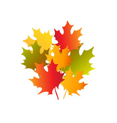 Bouquet of autumn maple leaves vector