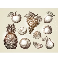 Collection fruits sketch Hand-drawn elements such vector image