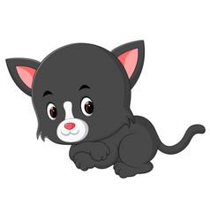 Cute cats cartoon vector