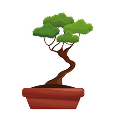 Pot tree bonsay longevity botanical hobby vector