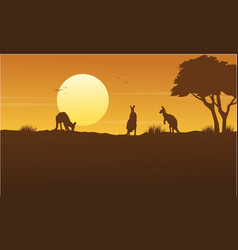 kangaroo scenery on park silhouettes vector image