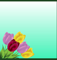 lovely spring background with tulip flowers vector image