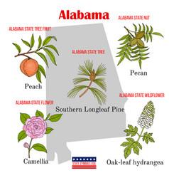 Alabama set usa official state symbols vector
