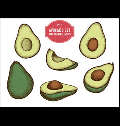 collection of hand drawn colored avocado vector image