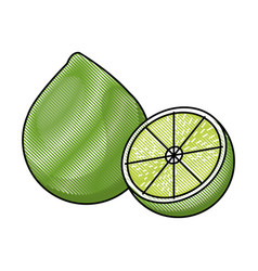 draw lemon citrus fruit fresh half vector image
