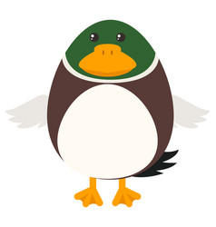 duck with round body vector image