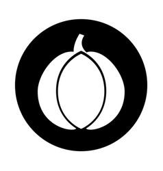 Garlic fresh vegetable icon vector