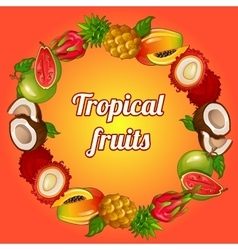wreath tropical fruits on bright background vector image