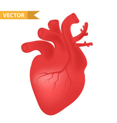human heart icon realistic 3d style internal vector image vector image