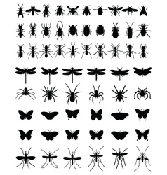 insects 2 vector image