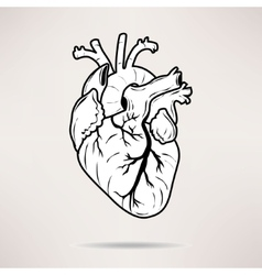 Icon Body heart icon On the white background vector image