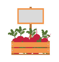 box with beet isolated icon vector image