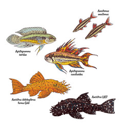 Colorful aquarium bottom fishes collection vector