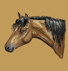 Colorful hand drawing horse portrait-1 vector