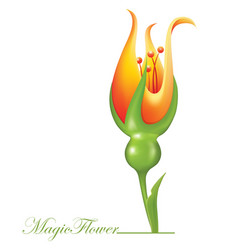 magic flower vector image