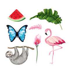 set animals with tropical watermelon and leaves vector image