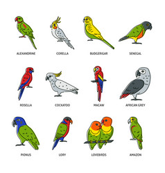 set parrot icons in colored line style vector image