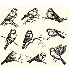 Tits sparrows and bullfinches on branches vector