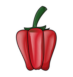 Draw pepper vegetable nutrition vitamin food vector