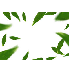 Flying tree fresh leaves over white layout vector