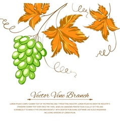 Grapes with autumn leaves around the grapes vector image