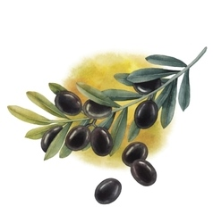 Watercolor black olive branch vector image