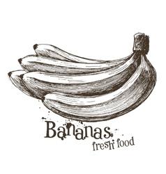 bananas logo design template fruit or food vector image vector image
