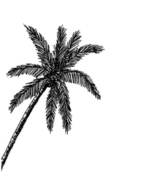 palm tree Tropical palm trees black silhouettes b vector image