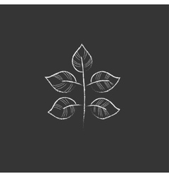 Branch with leaves Drawn in chalk icon vector image
