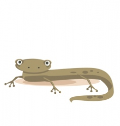 newt vector image