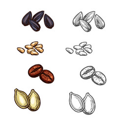 Nuts beans and seeds sketch icons vector