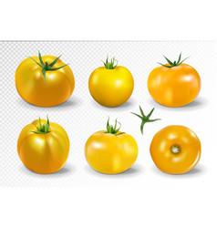 tomato set yellow tomato photo-realistic vector image