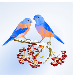birds bluebirds thrush small songbirdon vector image