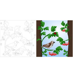 coloring page sparrow on a tree vector image